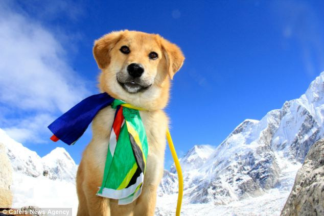 everestdog3