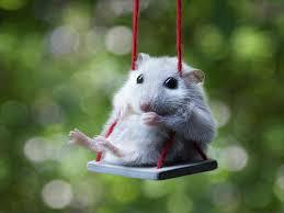 mouseswing