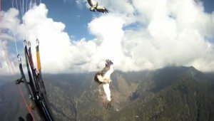 paraglidercrash