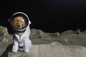 spacepup