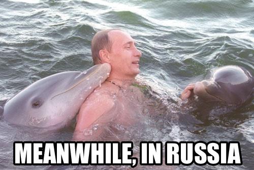 putindolphins