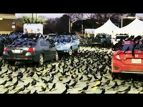 The KILO Morning Show: Thousands of Birds in a Houston Parking Lot