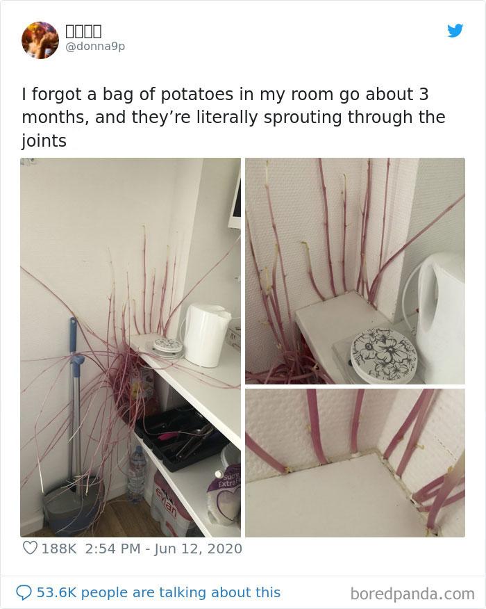 Sprouting Potatoes 5eec79ba61c60 700