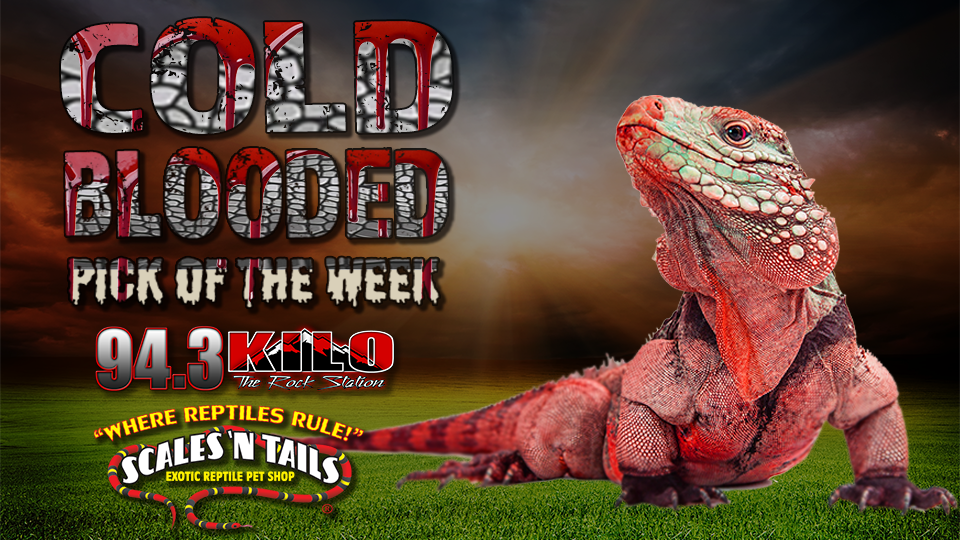 Cold Blooded Pick Of The Week Kilo