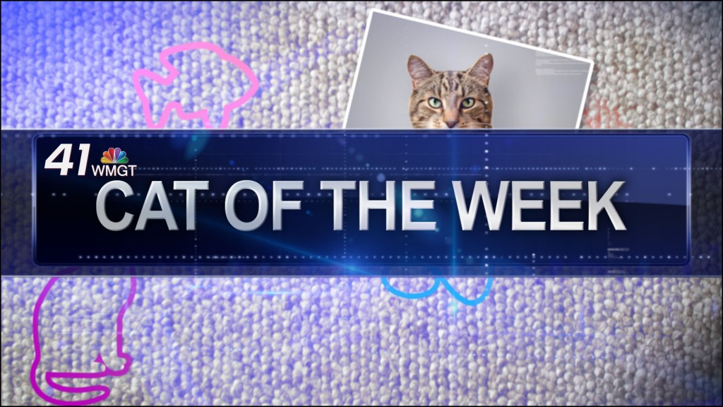 Generic Cat of the Week still