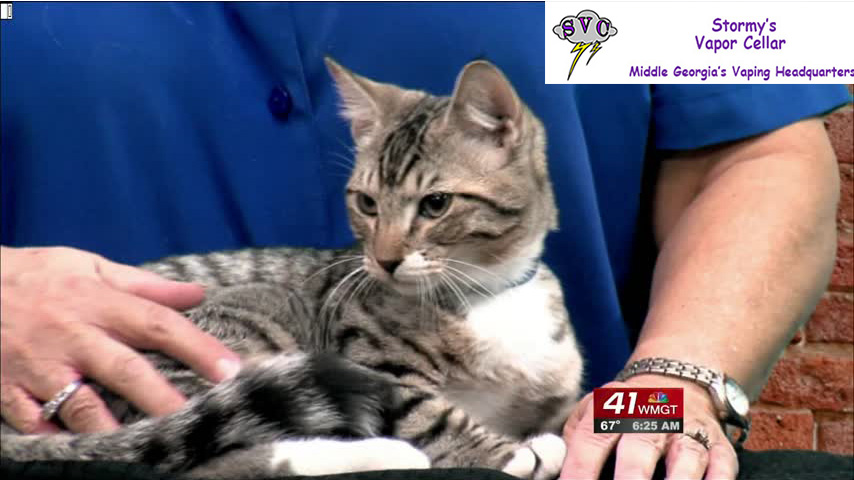Mittens is your Cat Of The Week this week.