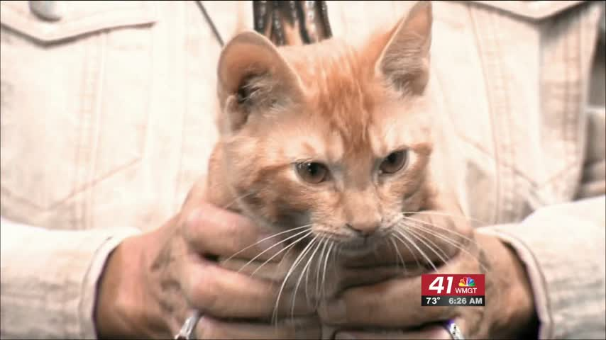Chip is your Cat Of The Week this week.