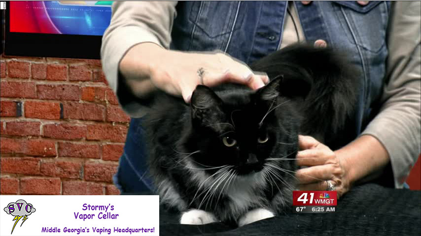 Gigi is your Cat Of The Week this week!