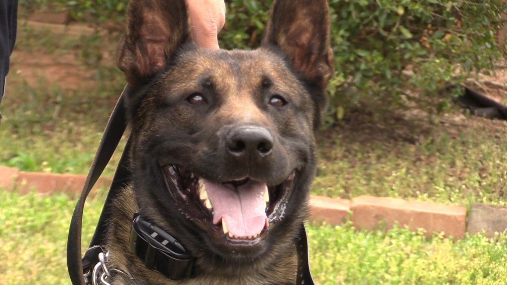 K9 Rocky is ready to help Forsyth be safer by finding illegal drugs and tracking down missing people.