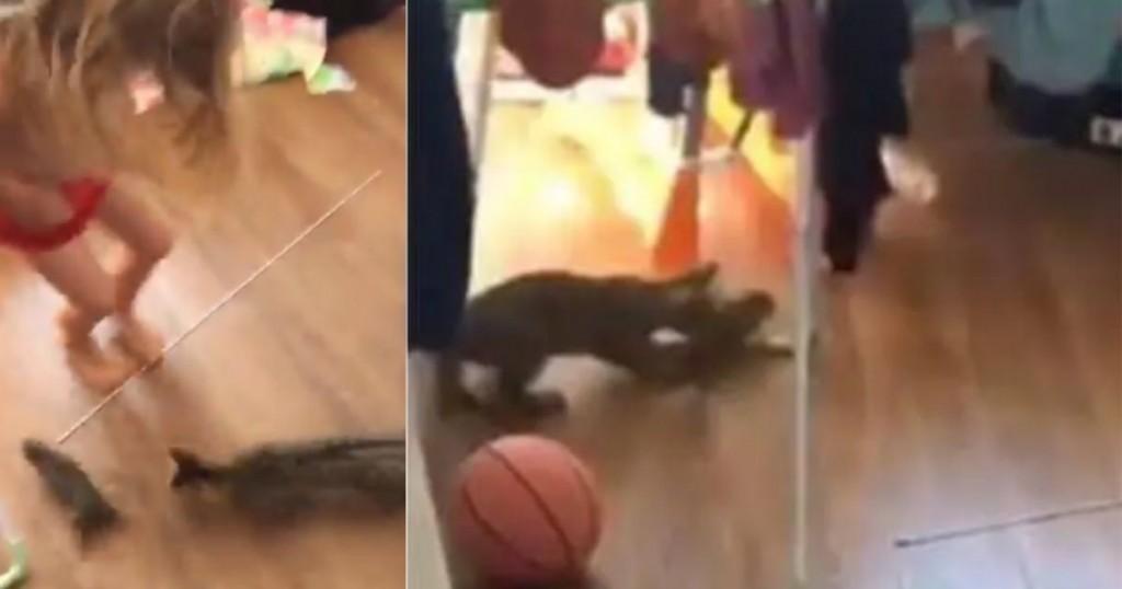 Viral Niña Confundió Una Rata Con Un 'conejo Bebé' Y Asustó A Su Madre