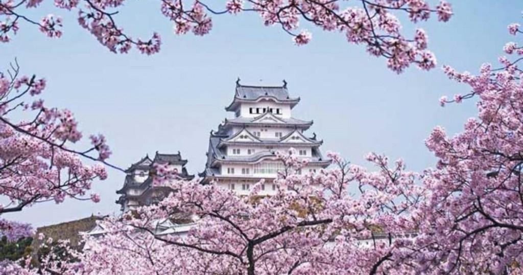 Mira La Razon Por La Que El Florecimiento De Los Cerezos En Japon Preocupa A Los Expertos