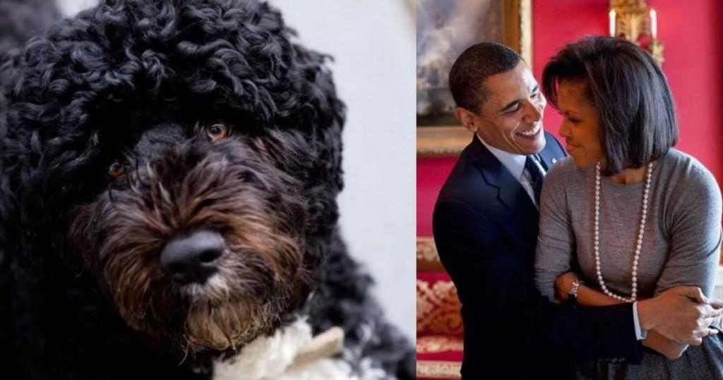Las Causas Por Las Cuales Murio Bo El Perro De La Familia Obama