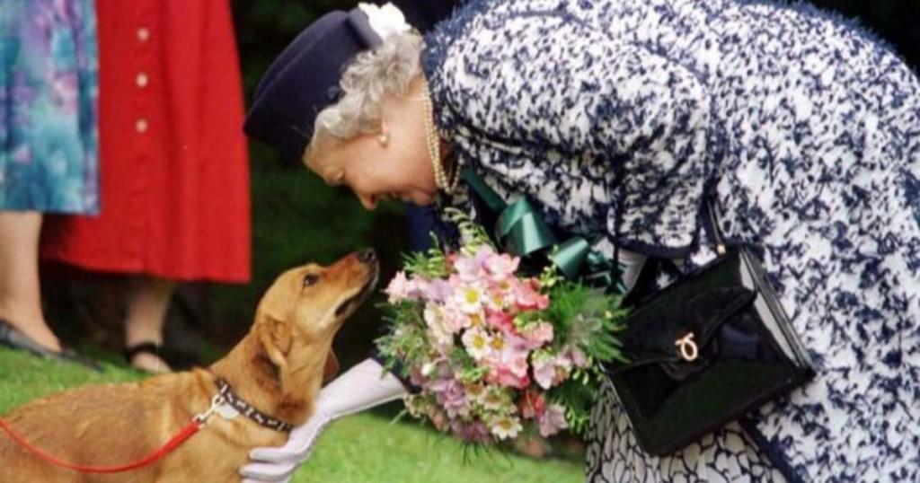 La Reina Isabel Ii Lanzo Linea De Accesorios Para Mascotas