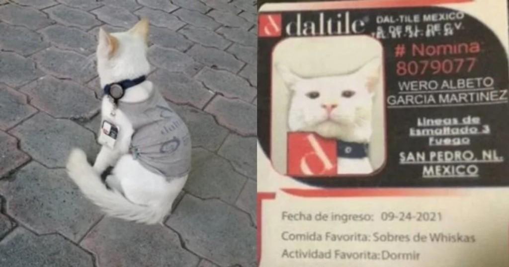 Gato Callejero Fue Contratado Por Una Empresa Y Se Hizo Viral