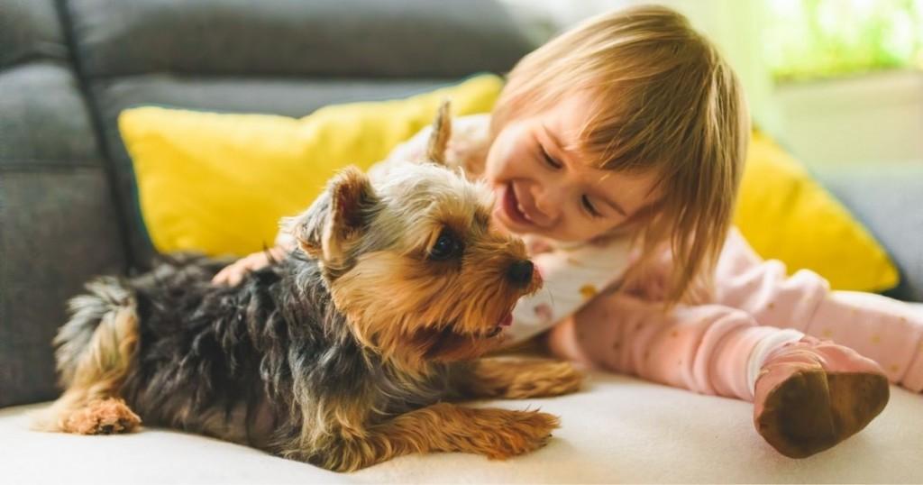 Mascotas Seran Consideradas Como Hijos En Los Procesos De Divorcio En Espana
