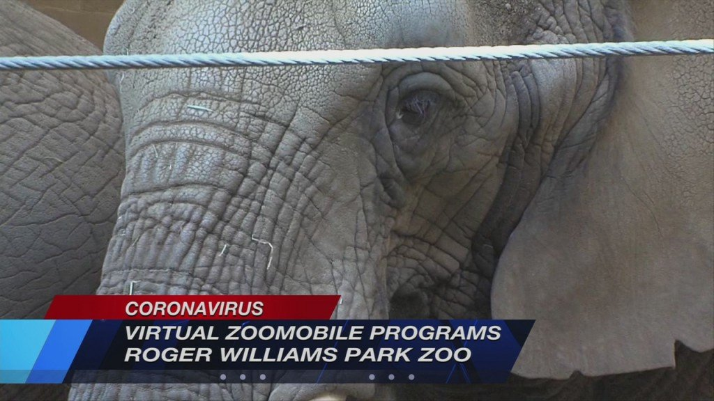Rwp Zoo Vosot