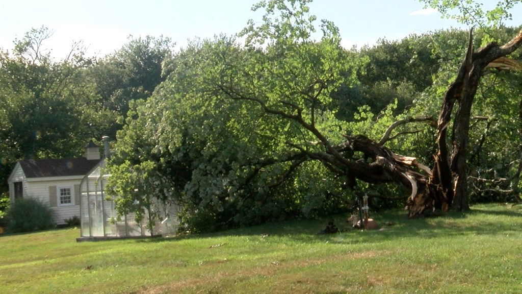 P Downed Trees.still001