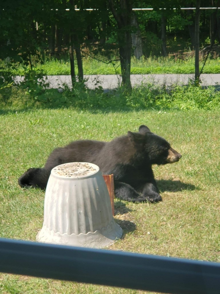 Bear Warwick