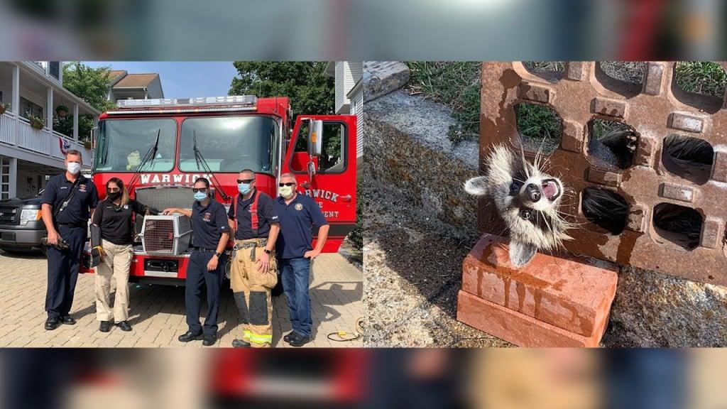 Warwick Raccoon Rescue