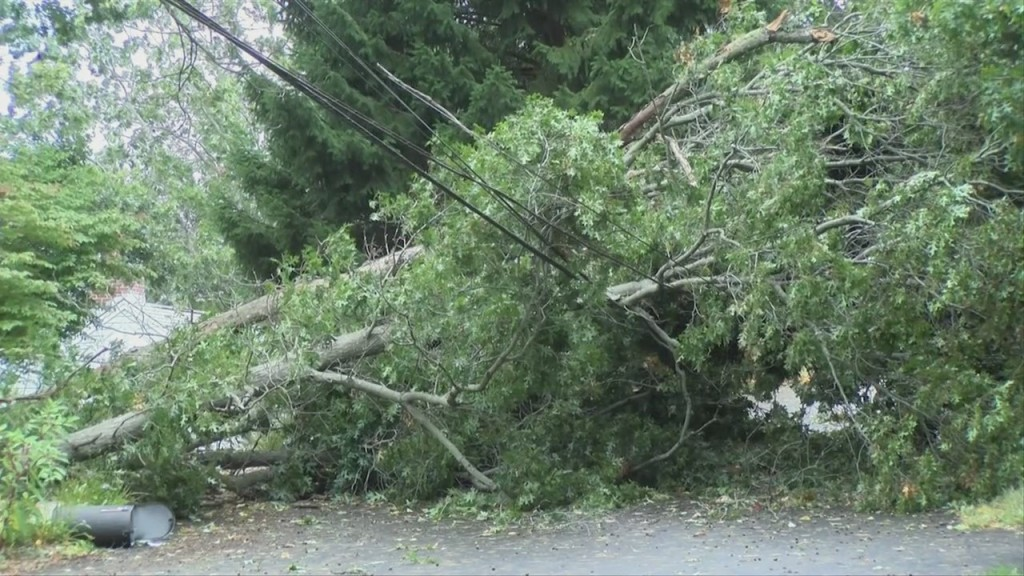 Massachusetts: Early Morning Strong Winds Topple Trees, Knock Out Power