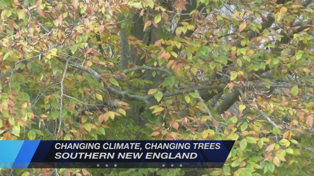 Climate Change Is Changing Trees In Southern New England
