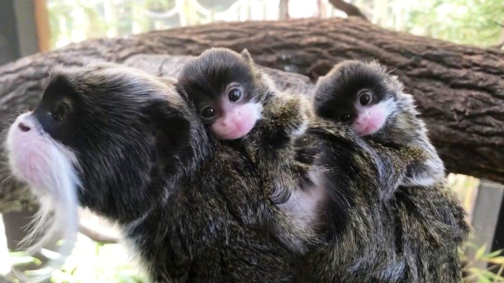 Bp Zoo Babies