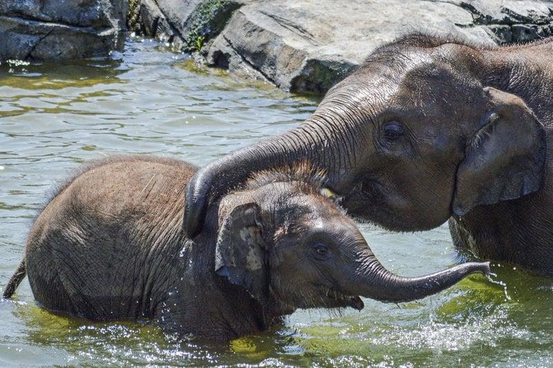 Gifford Zoo Elephants