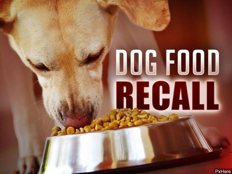 Dog Food 768x576