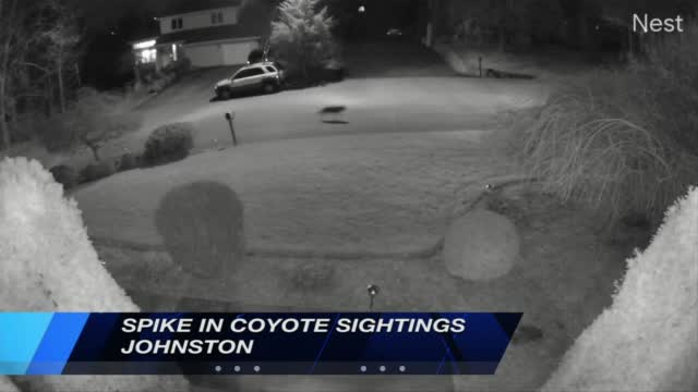 Johnston Coyotes