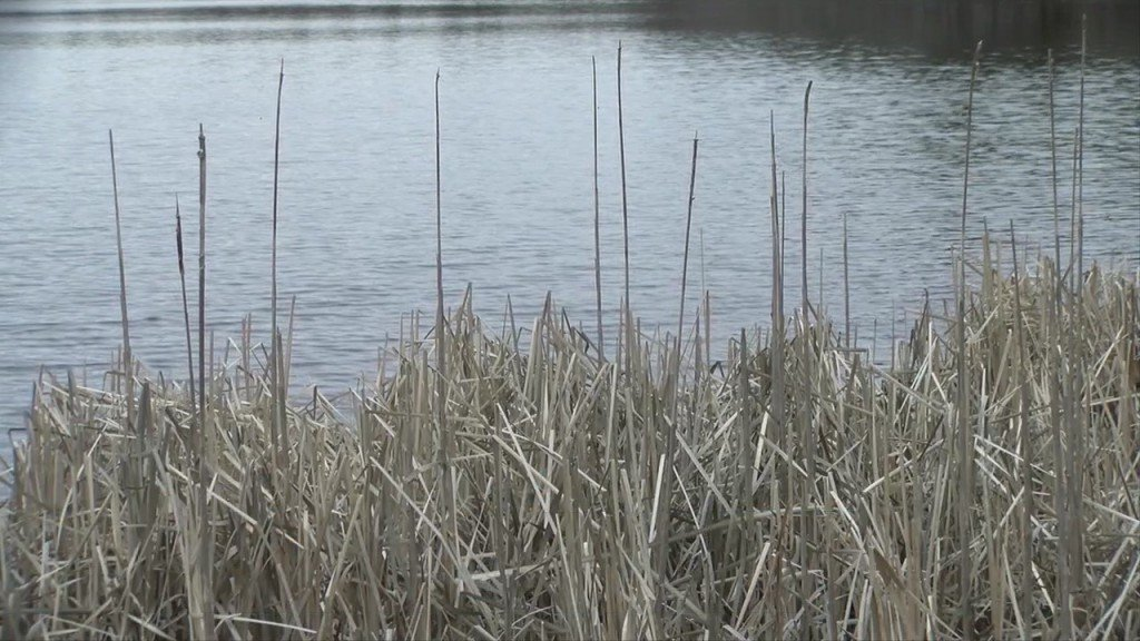Uri Watershed Watch: Ri Water Quality Changed In 2020 During Drought, Pandemic