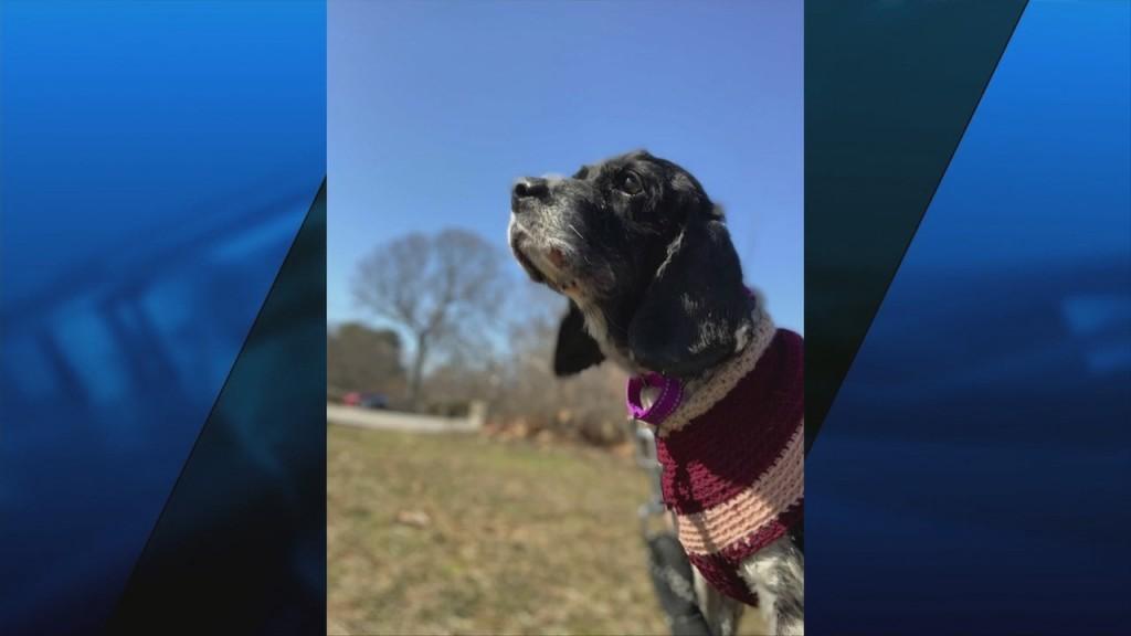 Pick Of The Litter: Meet Bella