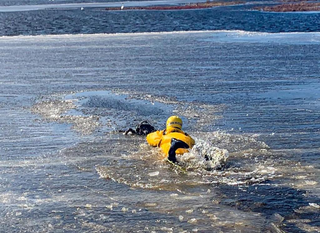 Hanson Dog Rescue