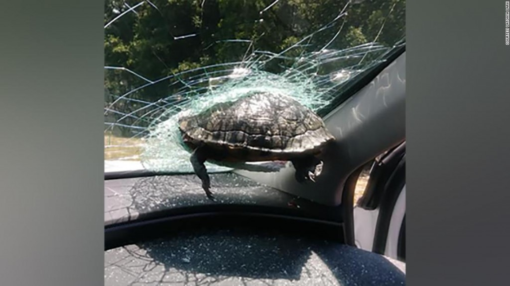 Turtle Windshield