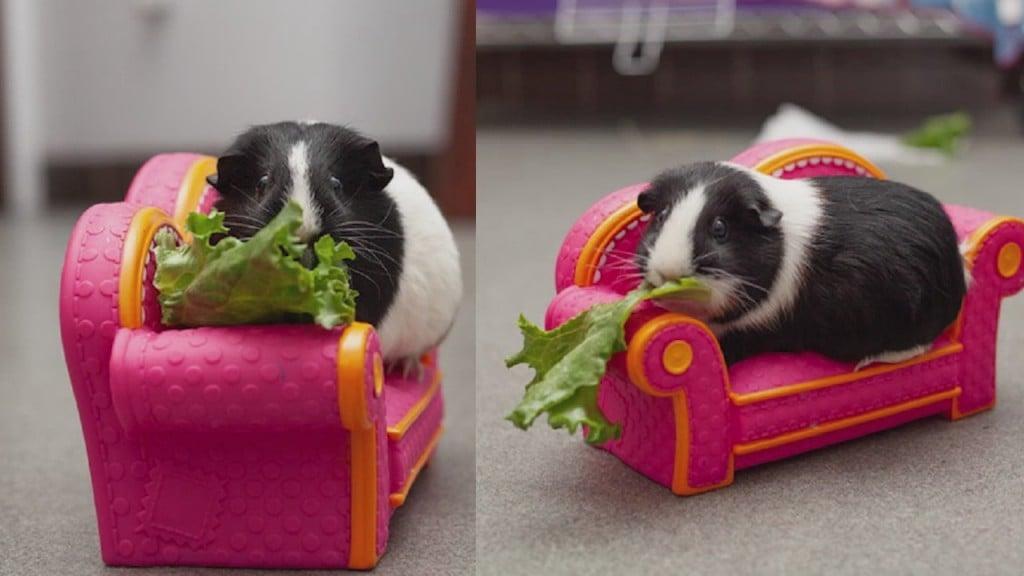 Pick Of The Litter: Meet Barbara & Debra!