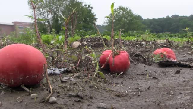 Rainy Farm Impact