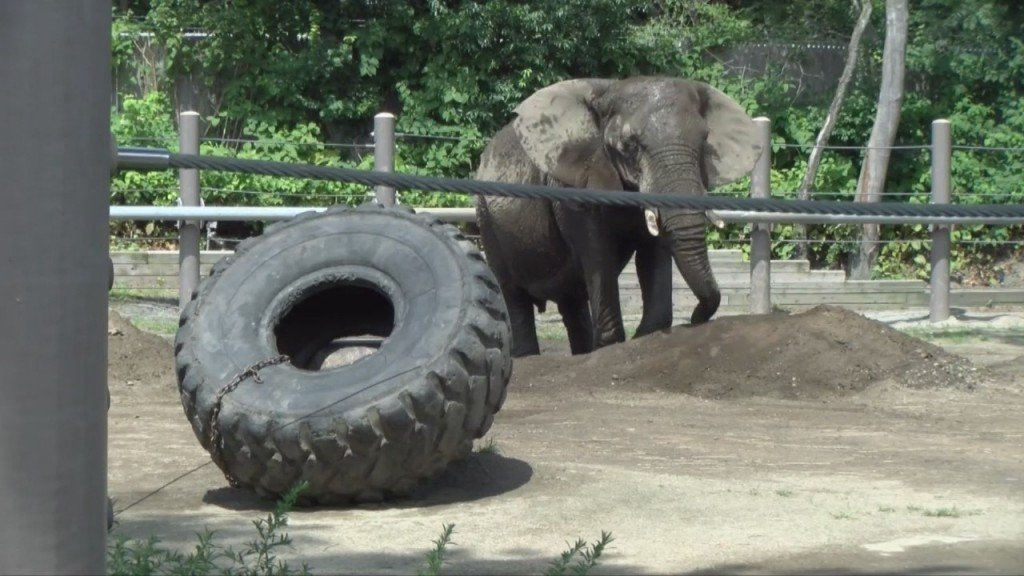 Zoo Staff Helping To Keep The Animals Cool During Heat Wave