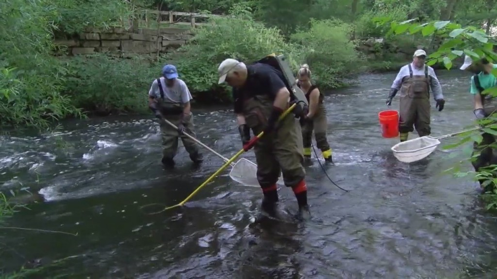 Local Environmental Group To Conduct Yearly Fish Audit In Providence & Smithfield