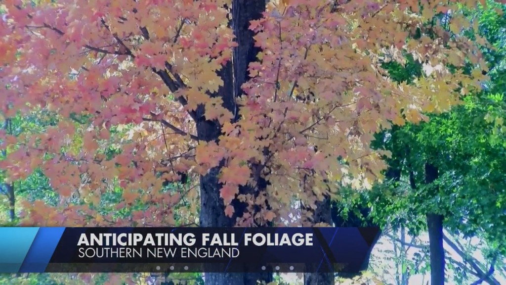 Rainy Summer Could Bring Late, But Spectacular Fall Foliage Season