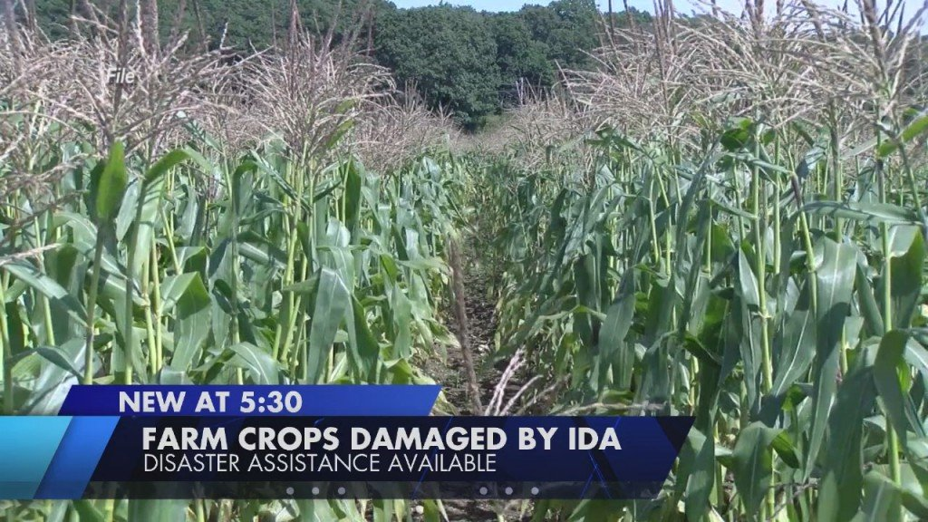 Federal Disaster Assistance Available To Some Farmers After Remnants Of Ida