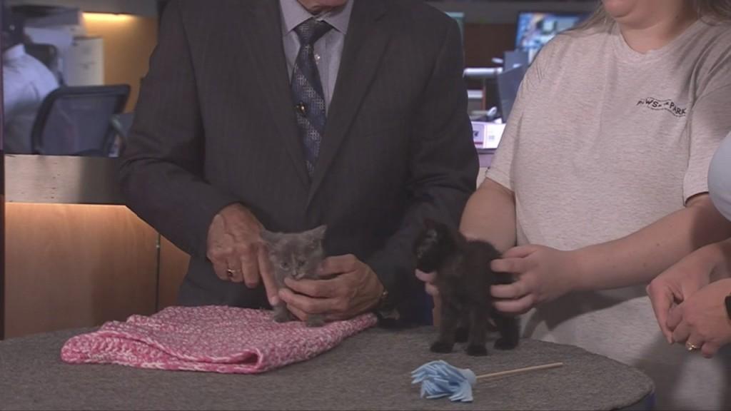 Pick Of The Litter: Kittens!