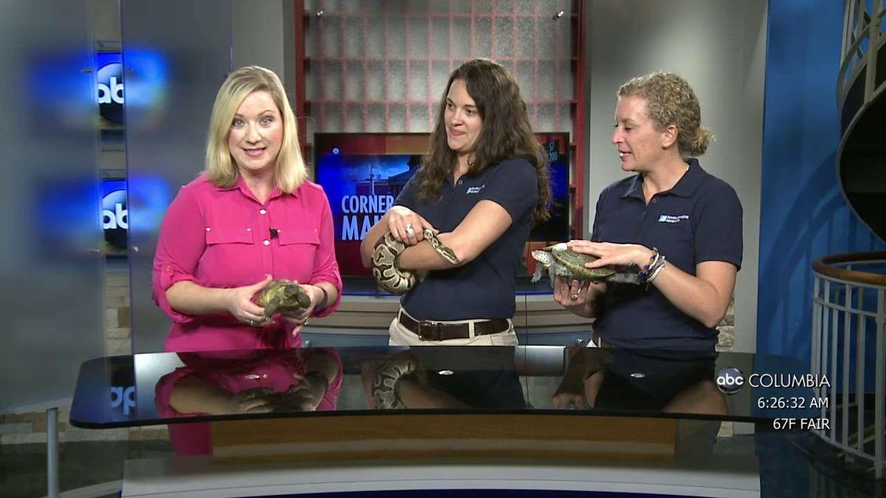 Watch Sc Aquarium Turtles Mermaids And More Abc Columbia