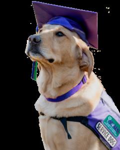 PAALS Graduation dog