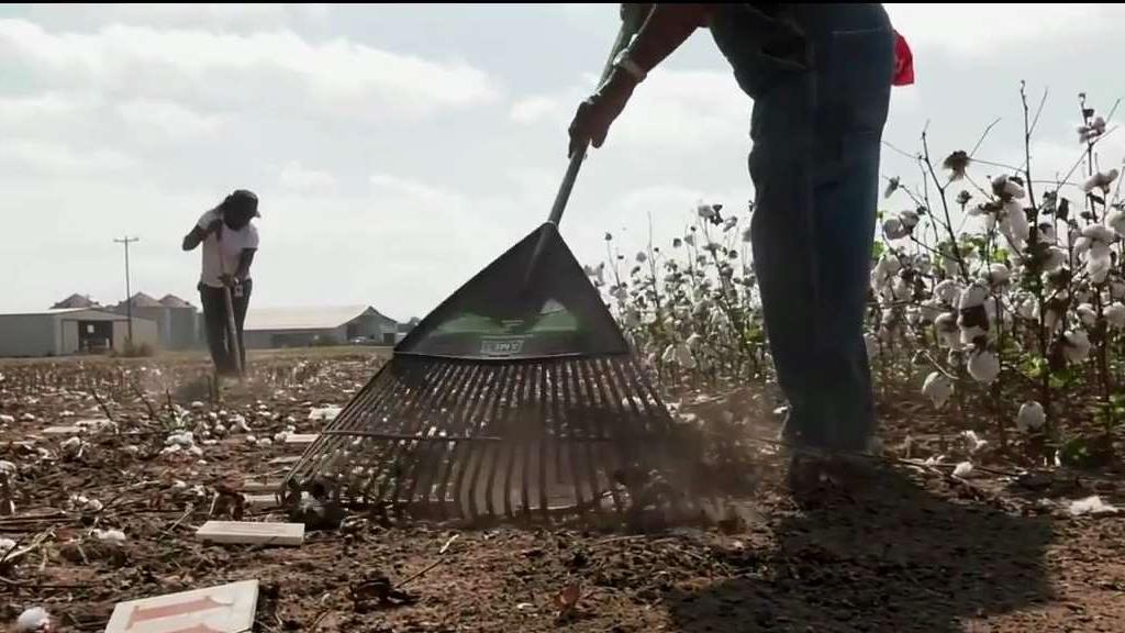 Controversy Surrounding 5th Grade Field Trip To Pick Cotton