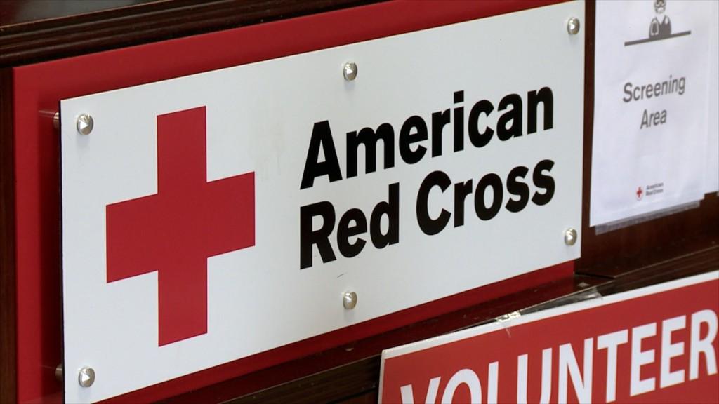 W11 P Red Cross Antibodies