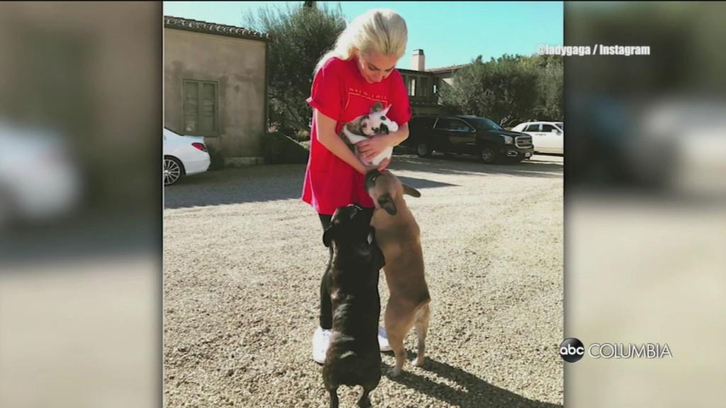 Gaga Dogs Stolen