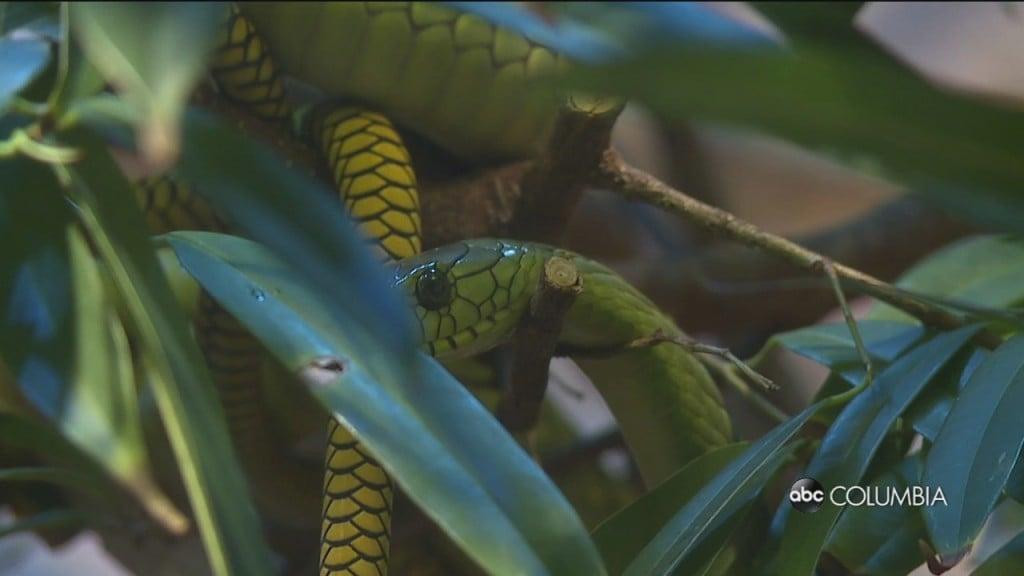 Raleigh Snake