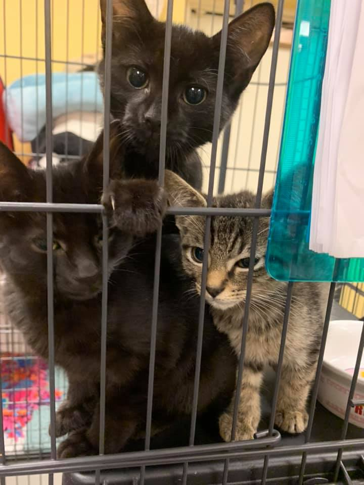 Kershaw Co Humane Society Cats