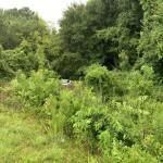 Cola Fire Car In Creek 2