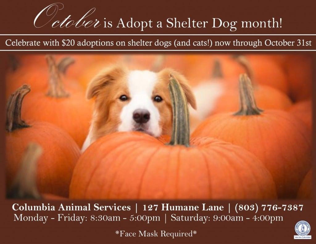 October Adoption Special 1