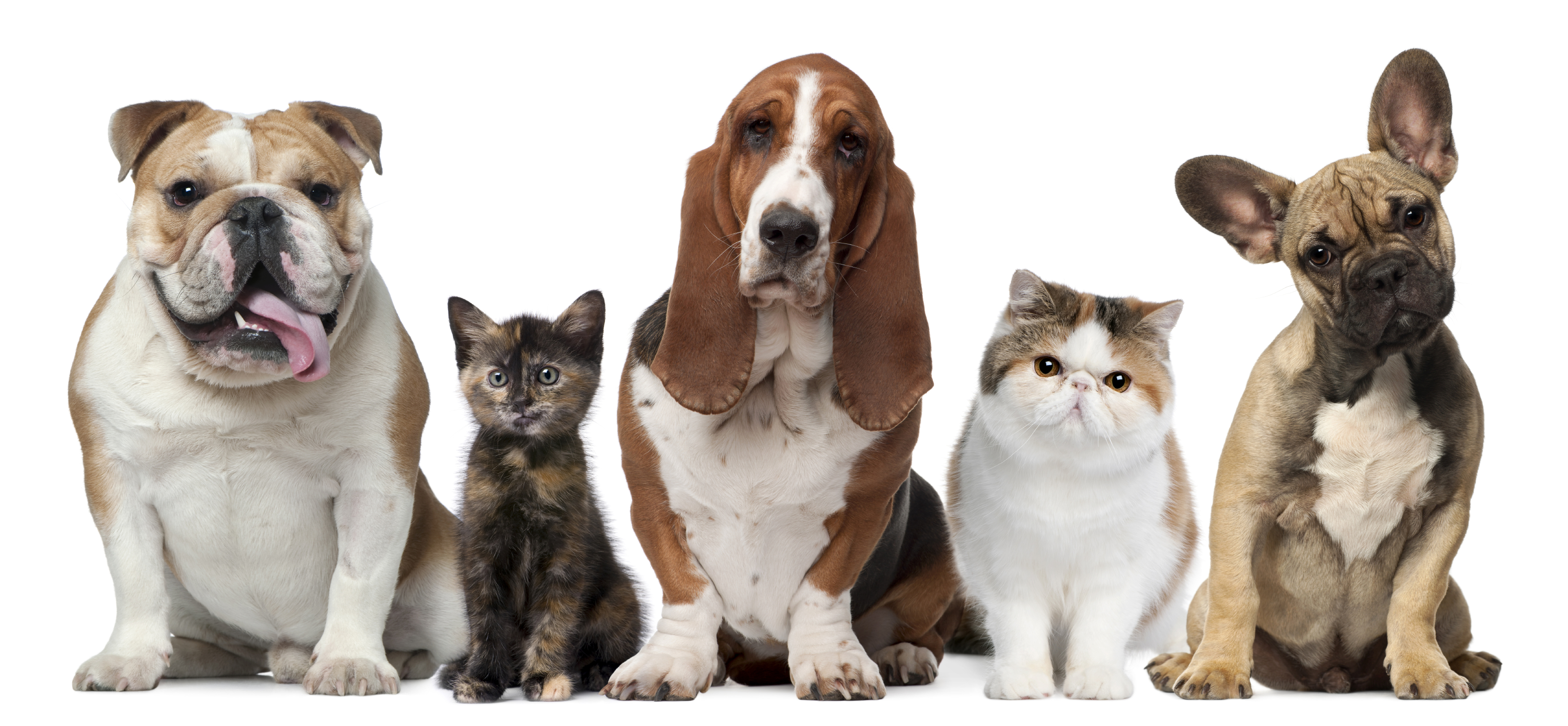 keeping pets safe in the heat alabama news
